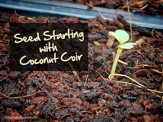 Seed Starting with Coconut Fiber