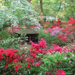 Growing Azaleas & Missing our Northern Virginia Yard a Bit ....