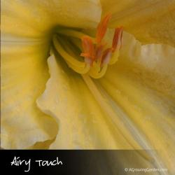 Airy Touch Daylily