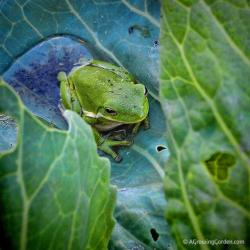 Tree Frogs Everywhere