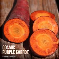 Cosmic Purple Carrots