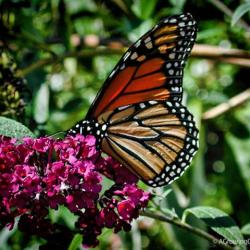 Plants That Attract Butterflies to Your Garden