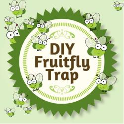 DIY Fruitfly Trap - It's Easy and It Works!