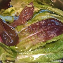 How to Wash Lettuce Picked From Your Garden