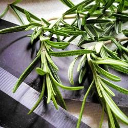 How to Propagate Rosemary from Cuttings