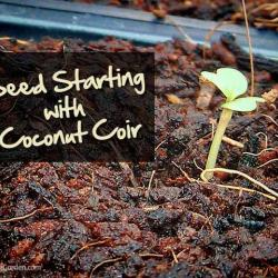 Seed Starting with Coconut Coir