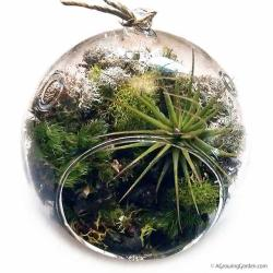 A Surprise Hanging Terrarium