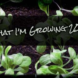 The Vegetables I'll be Growing in 2014