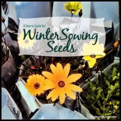 Winter Sowing Seeds: A How to Guide
